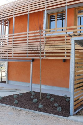 Plantations : tilleul lavande